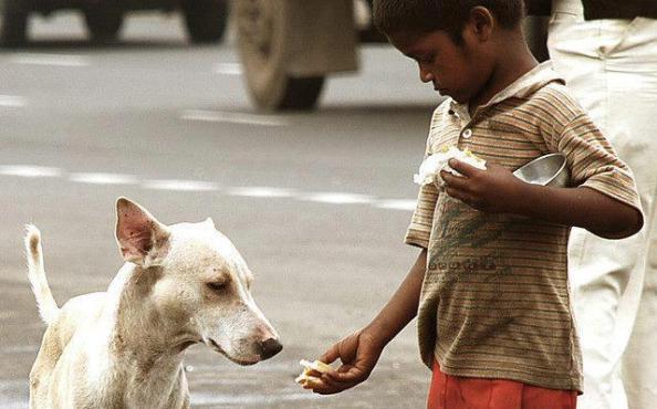 O cão e o menino