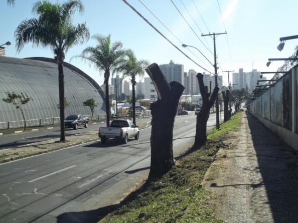 árvores de piracicaba