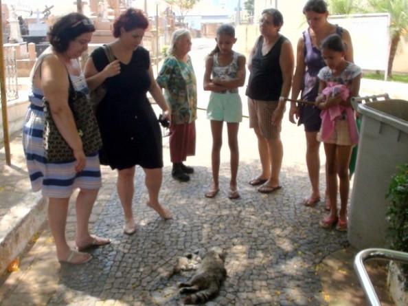 Fonte:  http://g1.globo.com/sp/piracicaba-regiao/noticia/2014/10/em-5-dias-25-gatos-sao-encontrados-mortos-em-cemiterio-de-piracicaba.html. Foto: Eduardo Martins EPTV